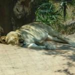サンタバーバラ動物園